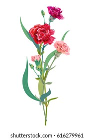 Bouquet of carnation schabaud, pink, red, scarlet flowers, green stem, leaves on white background, composition for Mother's Day, Victory day, digital draw, vintage illustration, vector