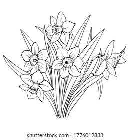 Bouquet of daffodils contour on white background. Outline hand drawing sketch of narcissus flowers. Decorative element for natural or romantic design, botanical illustration, coloring book, tattoo.