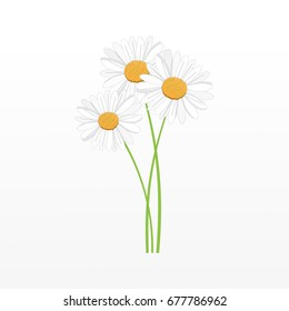 Bouquet of daisies on a gray background. Vector illustration.