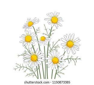 A bouquet of daisiey flowers on  white background. Hand-drawn floral composition. Vector illustration.