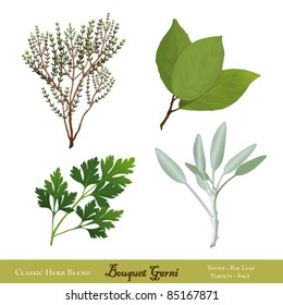 Bouquet Garni. Classic French herb blend for cooking: English Thyme, Bay Leaves, Italian Flat Leaf Parsley, Garden Sage, isolated on white. EPS8 compatible. See more herbs and spices in this series.