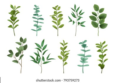 Bouquet greenery set isolated on white background. Herb and bushes branches with leaves in watercolor stylization.