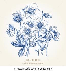 Bouquet of hellebore flowers. Vector floral design elements. Botanical illustration. Vintage style. Blue.