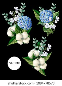 Bouquet  with Hortensia, cotton flowers and eucalyptus branches  on a black background. Vector illustration