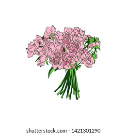 Bouquet of peony flowers. Hand drawn illustration on white background.