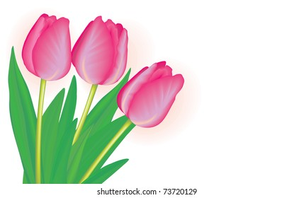 A bouquet of red tulips on a white background
