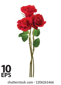 Bouquet of roses, isolated on white. Realistic vector 3d illustration