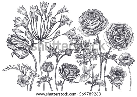Bouquet spring flowers blooming hand drawing stock vector royalty bouquet of spring flowers blooming hand drawing tulip african lily ranunculus anemones mightylinksfo
