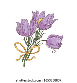 Bouquet of spring flowers pulsatilla with yellow ribbon. Vector illustration