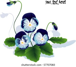 bouquet of summer flower. Pansy with leaves and bud. EPS10