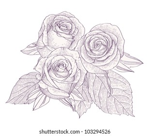 Bouquet with three roses isolated on white background vector