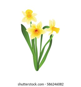 Bouquet of three yellow narcissus flowers with green leaves. Vector illustration