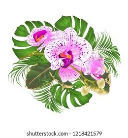 Bouquet with tropical flowers  floral arrangement, with beautiful purple and white orchid Phalaenopsis  palm,philodendron and ficus on a white background vintage vector illustration