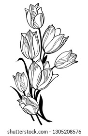 Bouquet with tulips isolated on white. Black Outline. Vector Illustration. Ornate Floral Element for Spring Design. Vertical Composition with Bunch of Tulips Flowers in sketchup style.