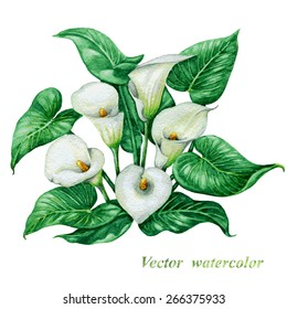 Bouquet of watercolor white  calla lilies with green  leaves.