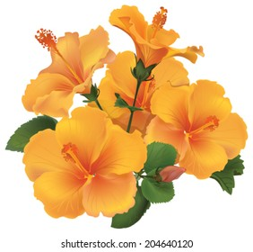 bouquet of yellow hibiscus flowers with leaves