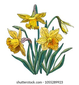 bouquet of yellow narcissus