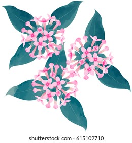 bouvardia - birth flower vector illustration in watercolor paint textures