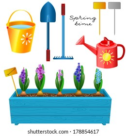 Box with blooming hyacinths and a set of garden tools. Spring time. Isolated on white background