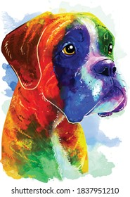 Boxer (breed) colorful dog portrait. Watercolor hand drawn illustration converted into vector.