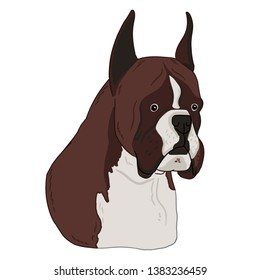 Boxer dog animal cute face. Vector illustration of cartoon simple dog portrait on white background. Animal art drawn by free hand. German boxer dog hand drawn illustration.