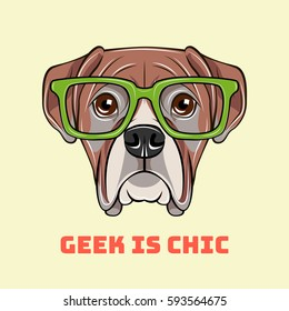 Boxer dog face in glasses. Geek is chic. Vector illustration isolated on white background