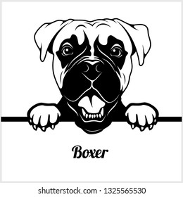 Boxer - Peeking Dogs - breed face head isolated on white - vector stock