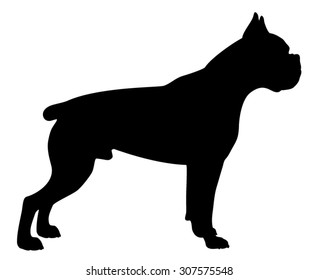 Boxer purebred dog with cropped ears and tail standing in side view - vector silhouette isolated