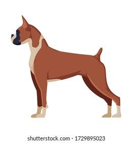 Boxer Purebred Dog, Pet Animal, Side View Vector Illustration