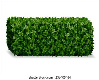 boxwood hedges ortho, decorative green fence