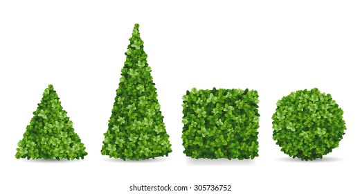 Boxwood shrubs of different forms. Topiary in the shape of a pyramid, sphere, cube. Decorative elements of the garden landscaping.