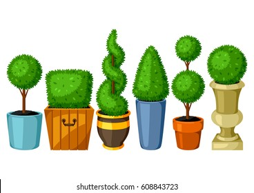 Boxwood topiary garden plants. Set of decorative trees in flowerpots.
