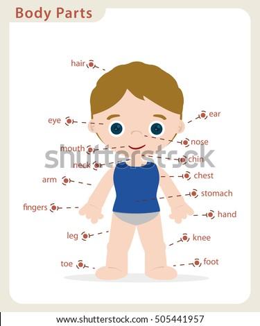 Boy Body Parts Diagram Poster Stock Vector (Royalty Free) 505441957 ...