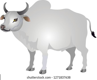 Brahman Cow, Indian Cattle - Vector Illustration