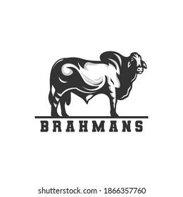 brahman cow logo, vector logo.