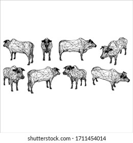 Brahman cow polygonal lines illustration. Abstract vector cow on the white background