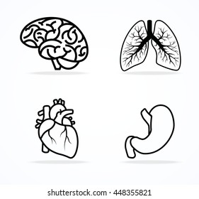 Brain, bronchi, heart and stomach icon vector isolated on white background. Line art.