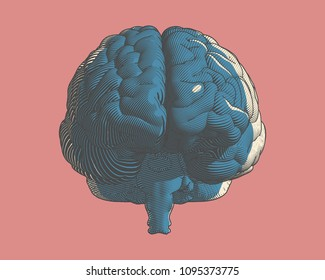 Brain color engraving drawing front view in graphic illustration style with flow line art isolated on pink background