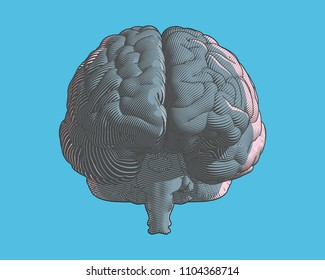 Brain color engraving drawing front view in graphic illustration style with flow line art isolated on blue background