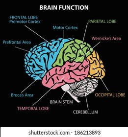 Motor cortex images stock photos vectors shutterstock brain diagram ccuart Gallery