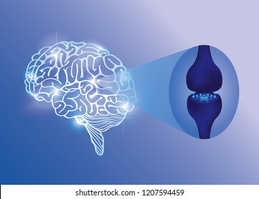 brain endocannabinoid system