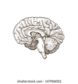 Brain hand drawn isolated on a white. Vector illustration