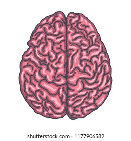 Brain of Human Hrand Drawn on white background. Vector illustration