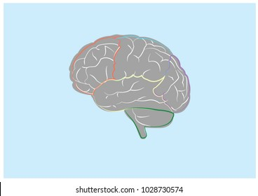 Brain illustration for education