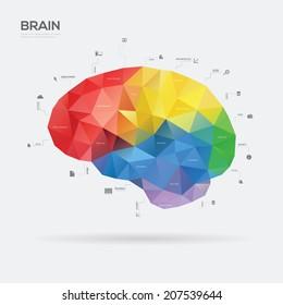 Brain Infographic concept. Vector illustration