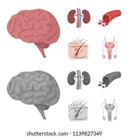 Brain, kidney, blood vessel, skin. Organs set collection icons in cartoon,monochrome style vector symbol stock illustration web.