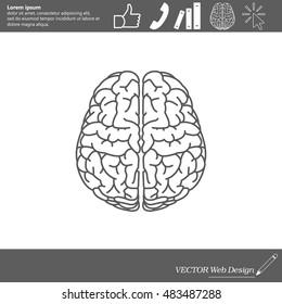 Brain line icon
