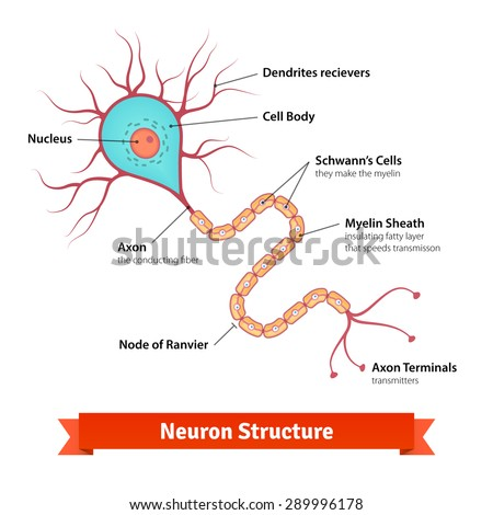 Astonishing Brain Neuron Cell Diagram Vector Illustration Stock Vektorgrafik Wiring 101 Orsalhahutechinfo