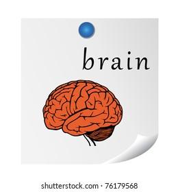 brain on sticker. illustration for education. EPS10