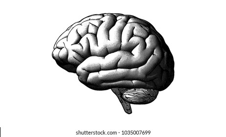Brain side view engraving drawing crosshatch in monochrome isolated on white background